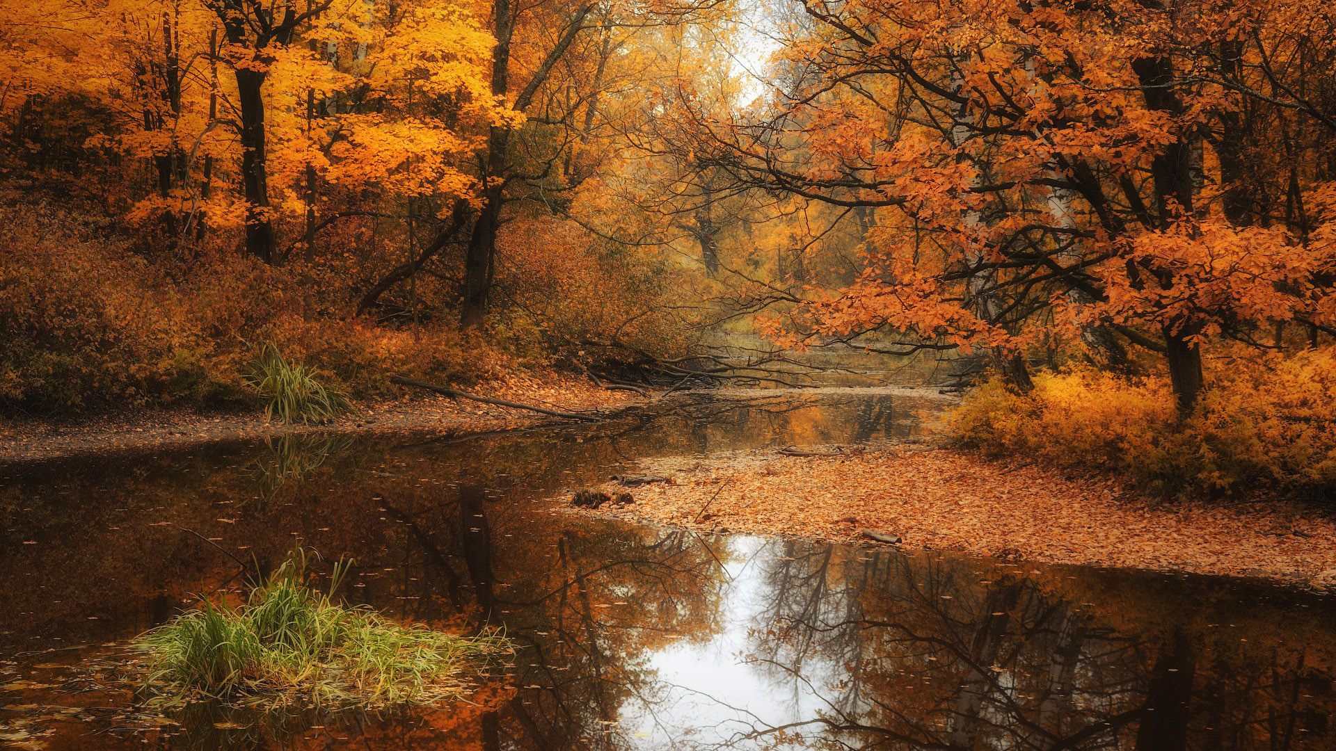 Shallow Stream In The Autumn Forest Nature Hd Wallpaper